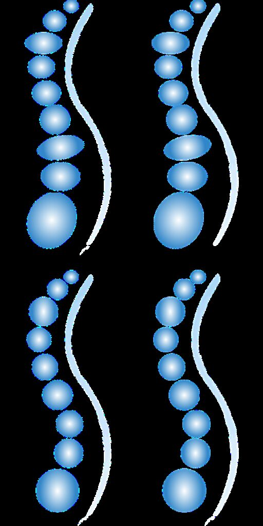 spine, different variants, ellipses